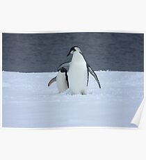 Grumpy little penguin Poster