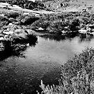 Bulls Head Creek by Nick  Taylor
