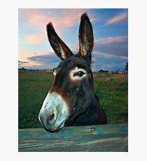 Donkey Business Photographic Print