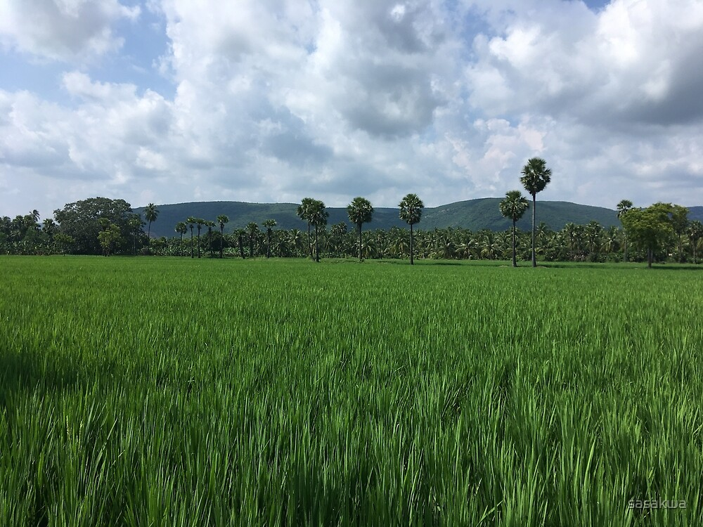 Rice field with coconut trees by sasakwa