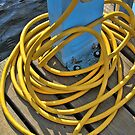 Yellow Dock Hose in the Sunshine by Sandra Lee Woods