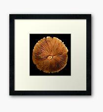 Mushroom Cap Framed Print