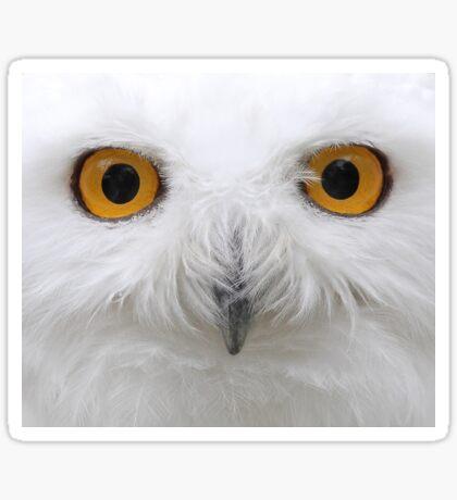 Snowy Eyes - Snowy Owl Sticker