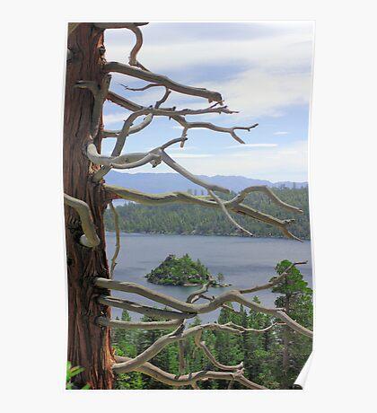 Emerald Bay Though Cedar Poster
