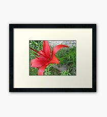 Floret Framed Print