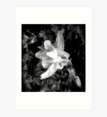 Spring Showers Black and White 02 Art Print