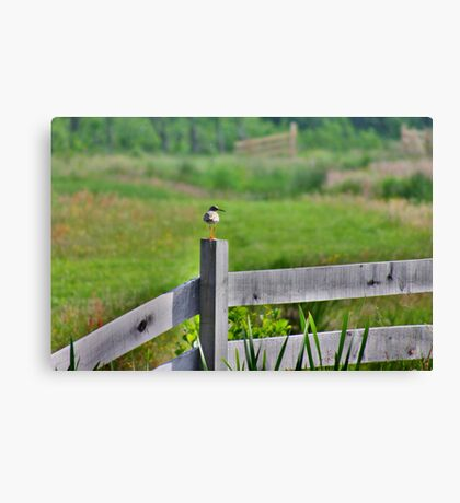 Redshank Fence Canvas Print