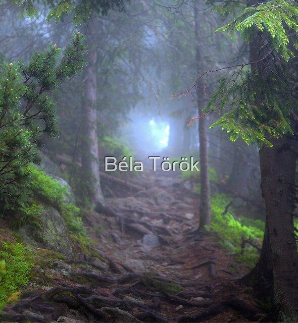 Dreamy Forrest by Béla Török
