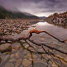 Hutt River Autumn Branch by Ken Wright