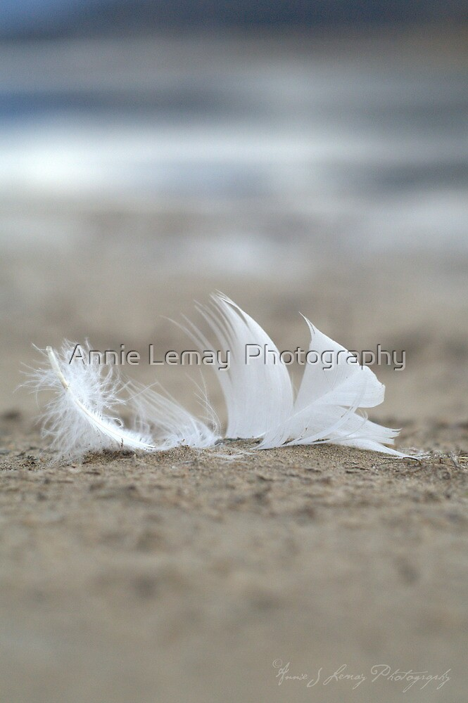 Purity by Annie Lemay  Photography
