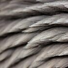 grey spikes by yvesrossetti