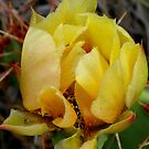 Yellow Rose of Cactus by Christine Ford
