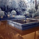 YSL Gardens Marrakesh Morocco (infrared) by Debbie Pinard