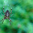 Garden Lady Spider by LadyEloise