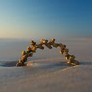 Seaweed Arc - Cable Beach - Broome WA by Chris Paddick