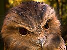 Tawny Frogmouth by BRogers