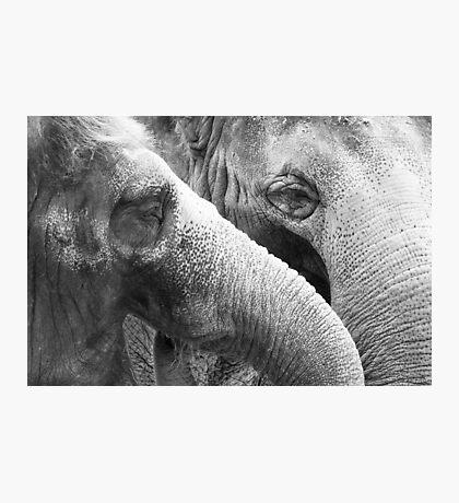 Elephants Photographic Print