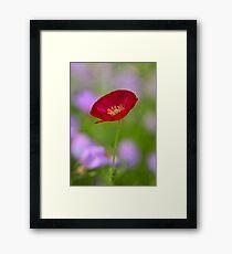 Single Red Poppy  Framed Print