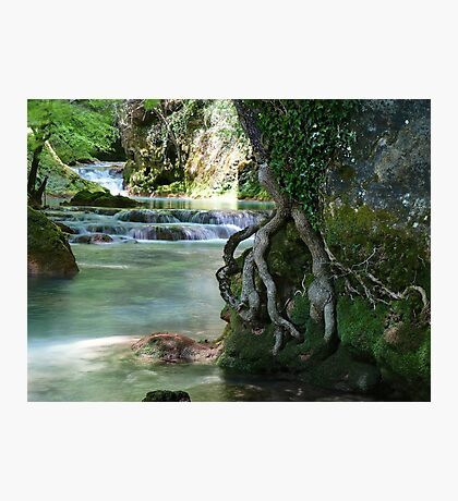Roots and Waterfalls Photographic Print