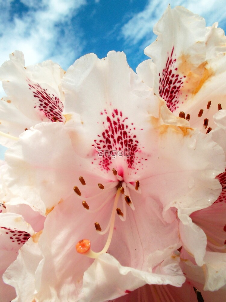 Rhododendron against blue sky by ©The Creative  Minds
