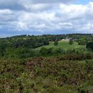 Ashdown Forest Panorama by mikebov