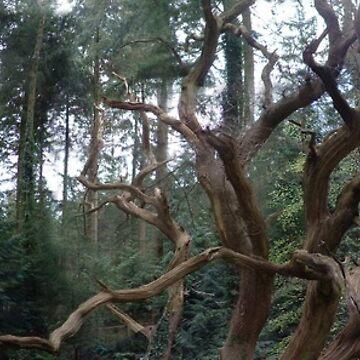 Dead Tree de cadellin