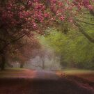 The Queen In Spring - Mount Wilson and Mount Irvine  NSW - The HDR Experience by Philip Johnson