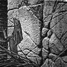Frilled Neck Lizard - Darwin NT by AllshotsImaging