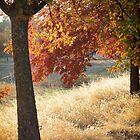 Two trees by Lynn Starner