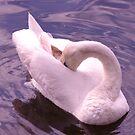 SWAN in Roath Lake, Cardiff by Michelle Boyd
