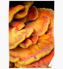 Pandorica Fungus Poster