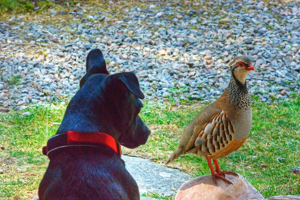 The Dog And Partridge by Jamie  Green