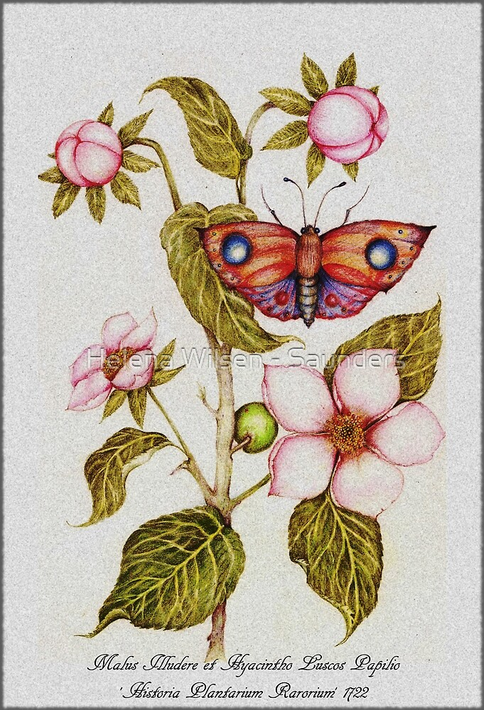 Malus Illudere Bookplate by Helena Wilsen - Saunders
