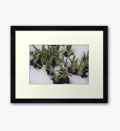 First Day Of Spring???? Framed Print