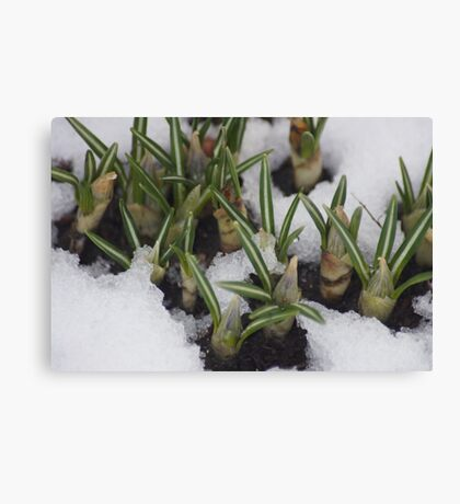 First Day Of Spring???? Canvas Print