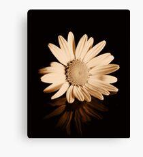 Albumen Daisy Canvas Print