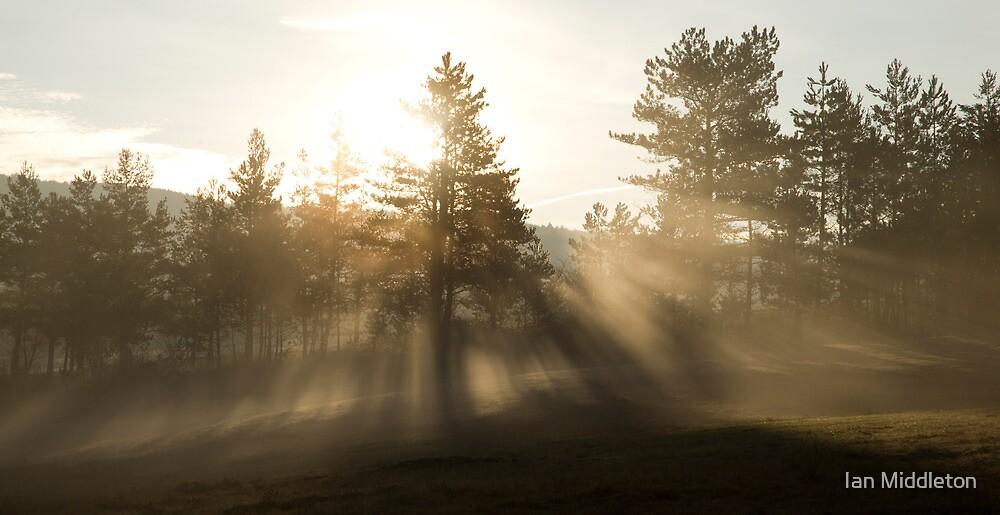Sunrise bursting through trees and mist by Ian Middleton