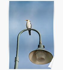 Bird on lamp post Poster