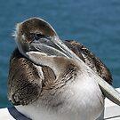 "Pelican II on Santa Cruz Wharf by Christine ""Xine"" Segalas"