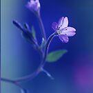 Midnight Blue by Donna-R