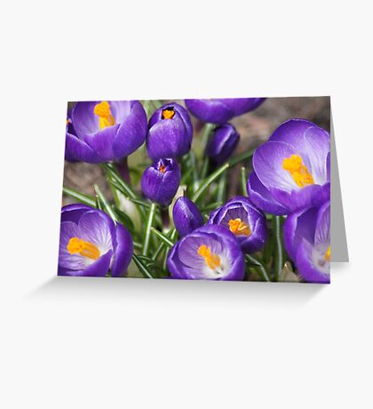 Springtime Jewels Greeting Card