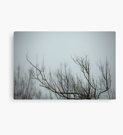 in the blue fog Canvas Print