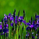 I love Purple! by Richard Lee