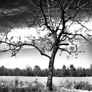 Lonely by Jennifer Rhoades