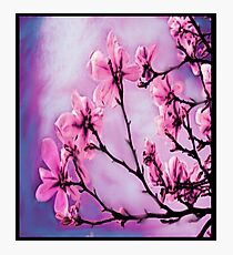Pretty Pink Flowers Photographic Print