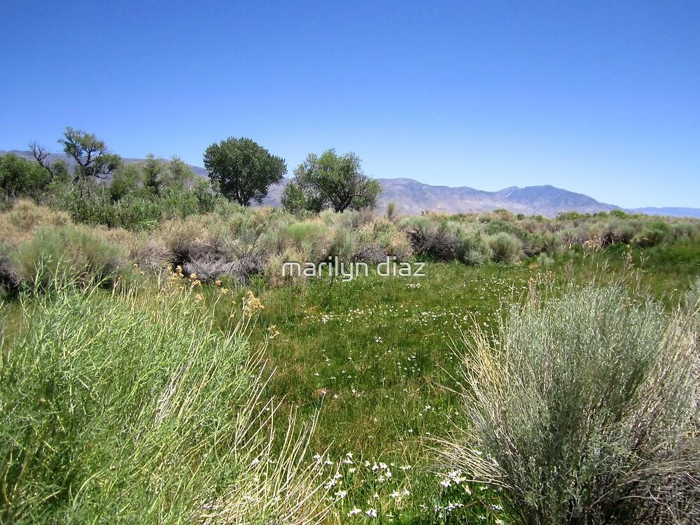 A Lush Valley by marilyn diaz
