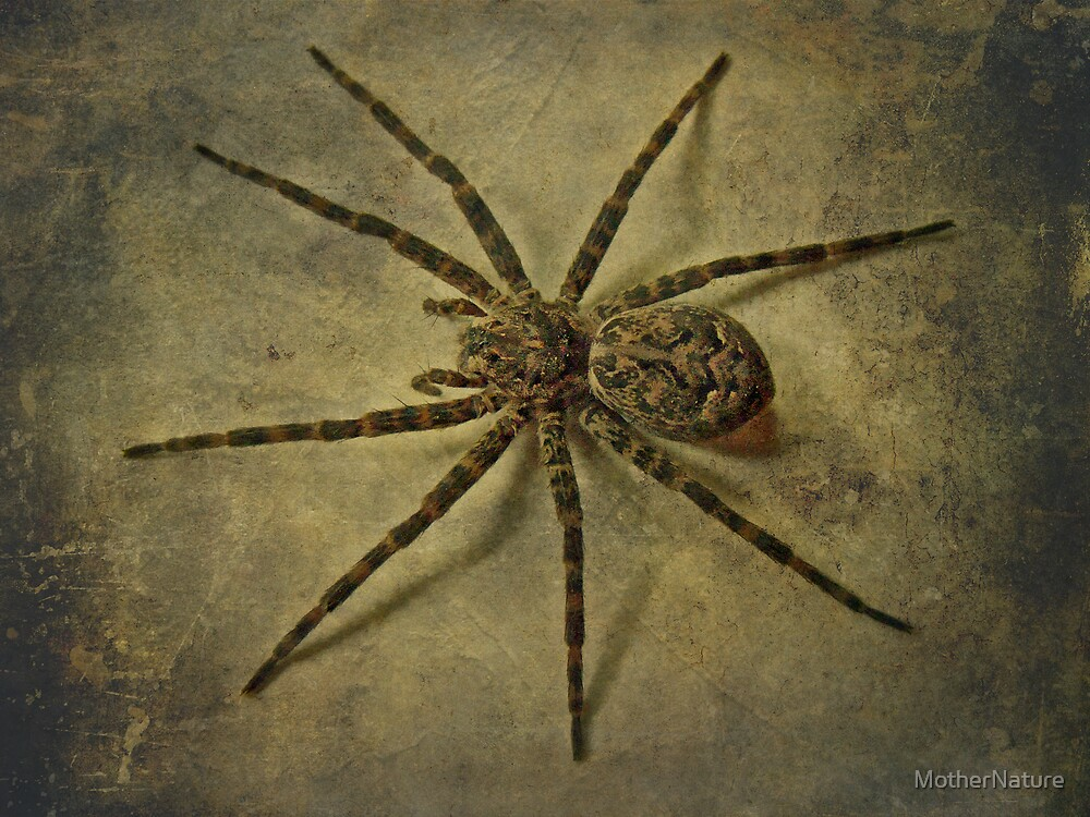 Dark Fishing Spider - Dolomedes tenebrosus by MotherNature