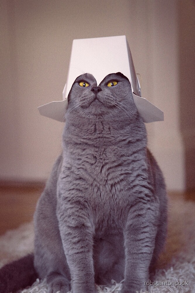 fig 1.4 - Cat with Chinese takeaway box on head by robstantoncook