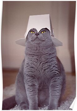 Quot Fig 1 4 Cat With Chinese Takeaway Box On Head Quot Posters