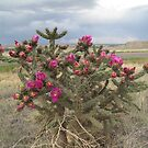 Blooming Bush by Christine Ford